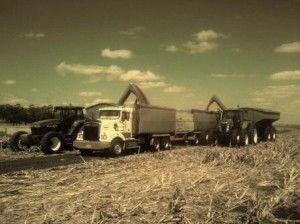 trucks loading out of fielda