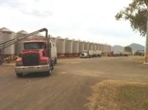 trucks loading grain 2